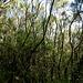 ... bis zum nun folgenden Erika-Wald