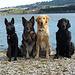 3 + 1 - v.r.n.l. Shadow, Finnley, Billy und Atze.
