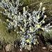 ... und schmucke Blumenwelt