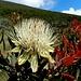 bergeisternde Blumenwelt 3