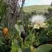 Blumenwelt 4