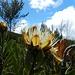 auf dieser Höhe: welch schöne Blumen sich da noch offenbaren