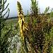 noch mehr der überraschend üppigen Flora
