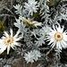 weitere Blumenvielfalt ...