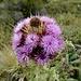 die Vielfalt der Blumen erfreut uns weiterhin