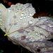 Ein beliebtes Herbstmotiv