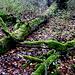 Totholz im Kleinen Deister