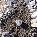 mabon hat mal wieder einen schönen Herzstein auf der Tour entdeckt. Nun steht er vor mabons Haustür. :-)