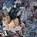 Herbstvariationen