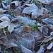 Der Herbst geht spürbar in den Winter über...