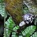 unterwegs im Regenwald 1 © Moni