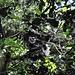 unterwegs im Regenwald 2 © Moni