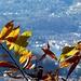 Colori delle foglie 1
