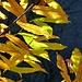 Colori delle foglie 2