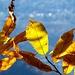 Colori delle foglie 4