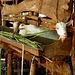 ... und mittelgrosse Tiere - alle stets in ihrem Stall eingesperrt ... © Bauke
