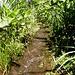 Suonen auch in Tansania © Bauke