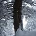 Wald wie im Märchen