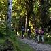 Schwülwarmes Wetter im Wald, der Weg ist aber kaum einmal steil.