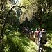 Der Abstieg auf dem Trägerweg war noch schöner als der Aufstieg (Hier unterhalb der Miriakamba Hütte)