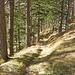 Abstieg im schönen Kiefernwald.
