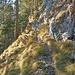 Kurzweiliger Abstieg im Kiefernwald.