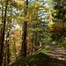 Herbstliche Farbem im Aufstieg