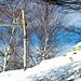 Ultimo cancelletto ...   Qui inizia un tiro di una cinquantina di metri di dislivello che porta all' Alpe Bardughè