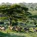 sehr friedlich und erhebend, viele der Landschafts- und Tier-Szenen, welche wir beobachten können