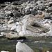 Verzasca bei Gerra: Steine bis zum Ausflippen