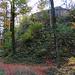 Ruine Alt Landenberg bei Bauma