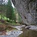 Hervorragend vorragendende Nagelfluh-Felsen drohen den Wald zu erdrücken