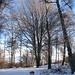 Un particolare albero che sembra puntualizzare il centro della cima