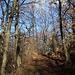 """Vom Zentrum in Mátrafüred (350m) beginnt der eigentliche Aufstieg zum Kékestető. Schon wenige Meter oberhalb des Dorfes verläuft der Wanderweg durch schönen Eichenwald. Zunächst folgt man dem gemeinsamen Wanderweg der """"roten"""" und der """"grünen"""" Markierungen die beide auf das Dach Ungarns gehen."""
