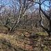 Der Hügelrücken Peres-bérc ist eines der schönsten Teilstücke im Aufstieg zum Kékestető wo sich der nun nur noch weiss-rot-weiss markierte Wanderweg durch lichten Eichenwald schlängelt.