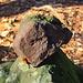Ein typischer Trachyt-Stein aud dem das Mátra-Gebirge aufgebaut ist.