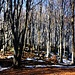 Prächtiger Buchenwald beim Vorgipfel Hidas-bérc (973m).