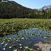 Il Cub Lake pieno di nifee