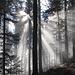 Schöne Stimmung im Wald zum Twannberg