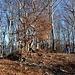 La piatta cima boscosa del Monte Pinzernone
