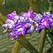 Dicke Wassertropfen an den Blüten