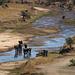 Das letzte fließende Gewässer zieht eine riesige Menge an Tieren an