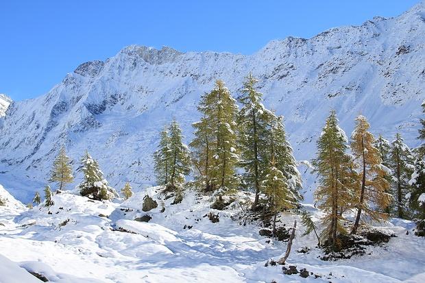 Schinhorn, Lärchen, Schnee