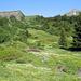 Vor der Grossen Scheidegg: die richtige Jahreszeit für Bergblumen