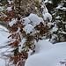 im verschneiten Wald